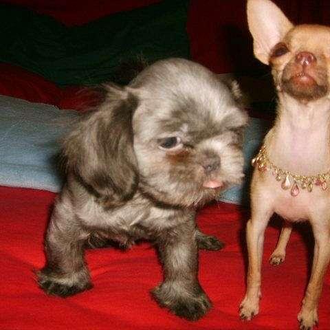 GodsPuppies