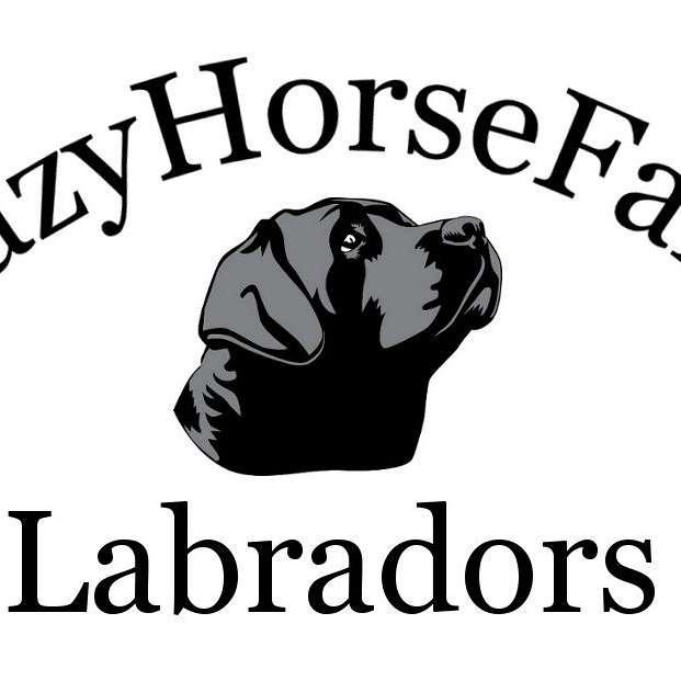 CrazyHorseFarm Labradors
