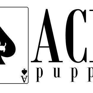 Ace Puppy