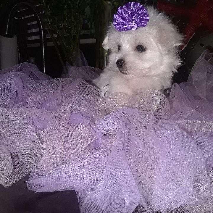 Precious Plush Play Puppies Inc.
