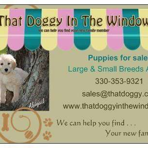 That Doggy In The Window LLC