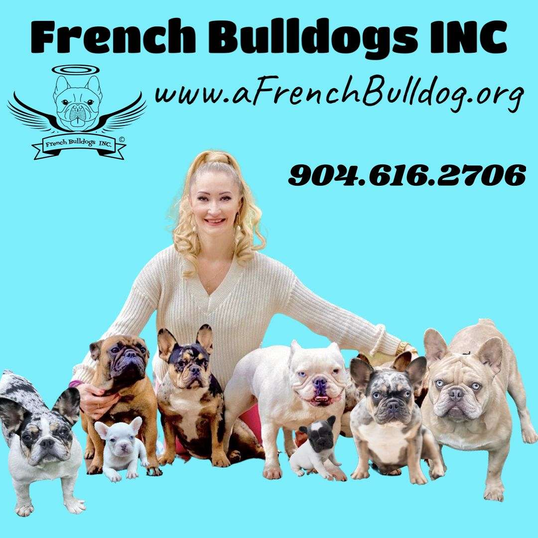 AARN French Bulldogs LLC