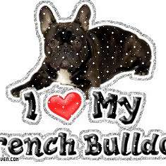 My Family Frenchies