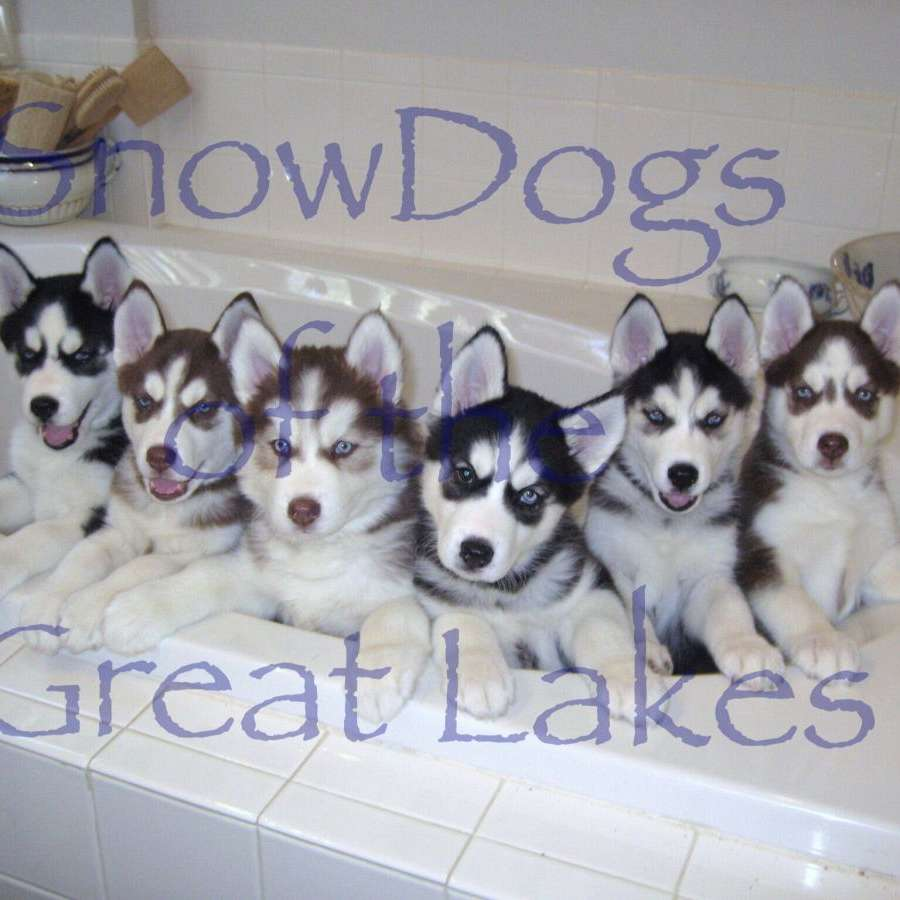 SnowDogs of Colorado