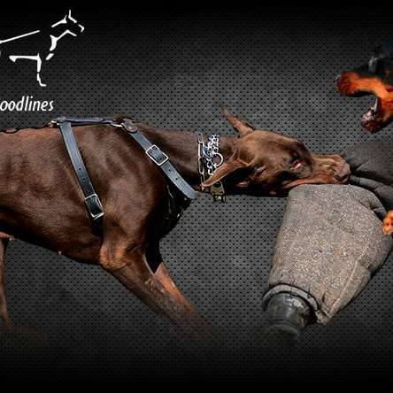 EuropeanDobermanStud.com