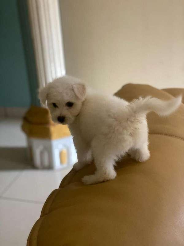 docker-dog-for-sale